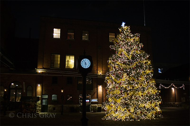 Distillery Christmas Tree.jpg