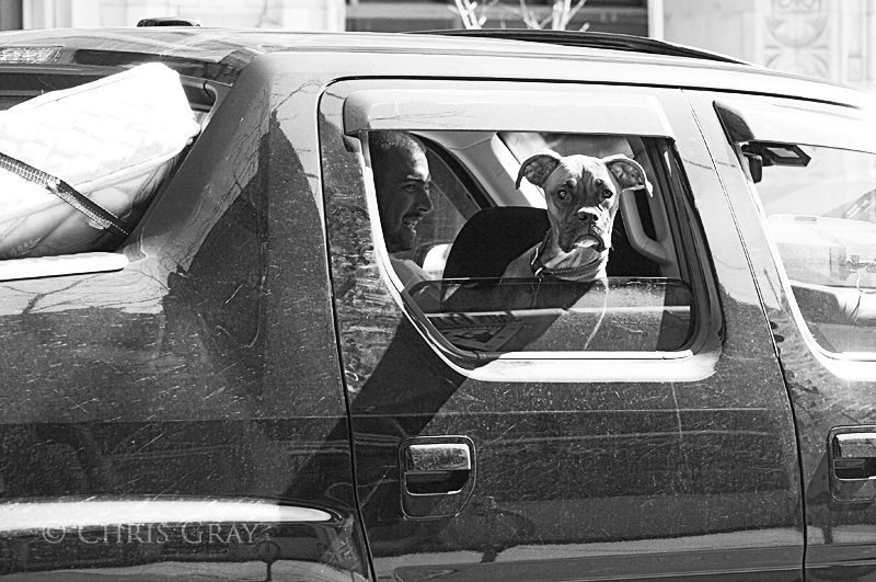 Dog in a Truck on Queen West.jpg