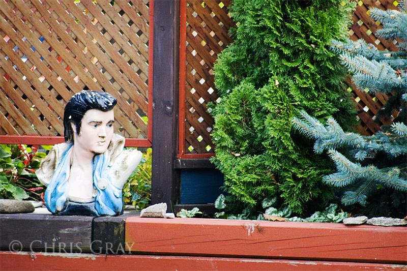 Elvis - is that You.jpg