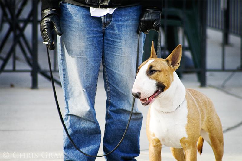 Good Dog!.jpg
