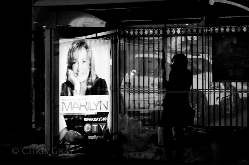 Marilyn Shelter.jpg