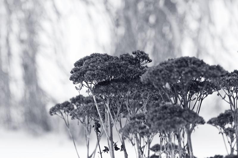 More Weeds.jpg