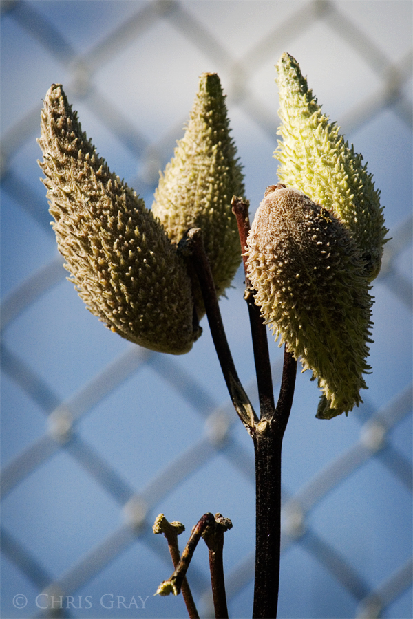 Seed Pods.jpg