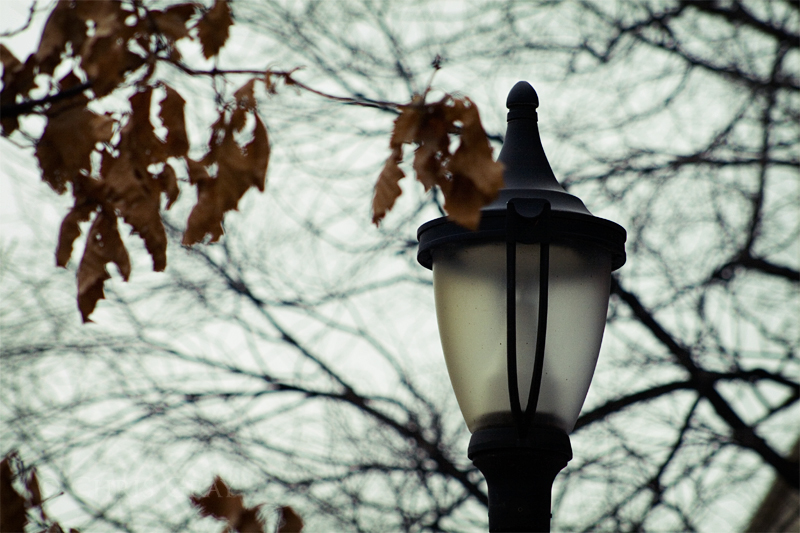 Street Light and Leaves.jpg