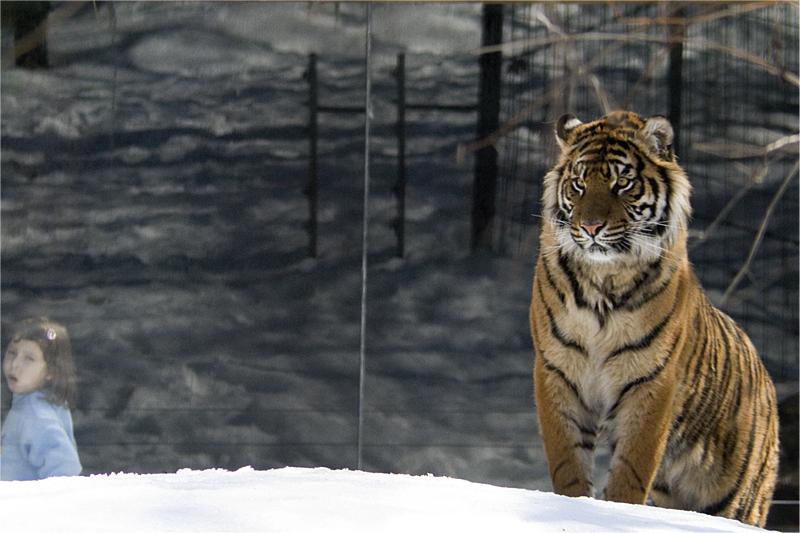 Tiger and Munchkin.jpg