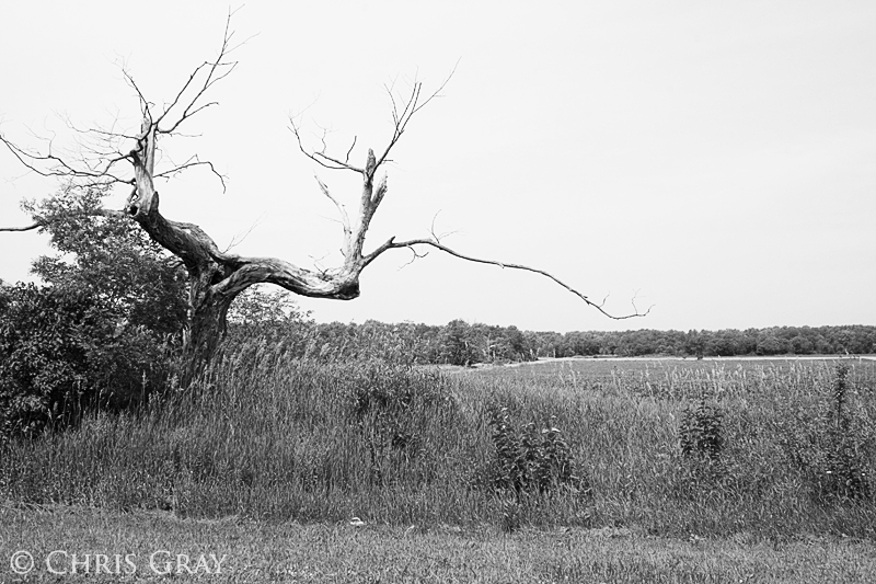 Tree in Prince Edward County.jpg