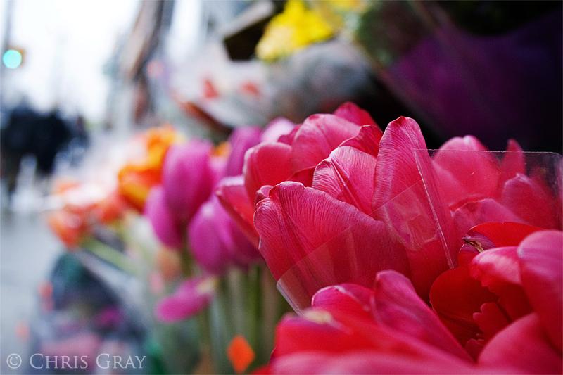 Tulips on Queen.jpg